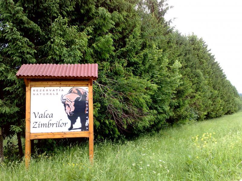 Valea Zimbrilor - Rezervatia Naturala de Zimbrii si Reni